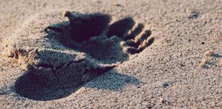 Der Fuß - Das Fundament unseres Körpers